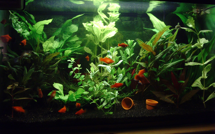 Pin Een Koudwater Aquarium on Pinterest